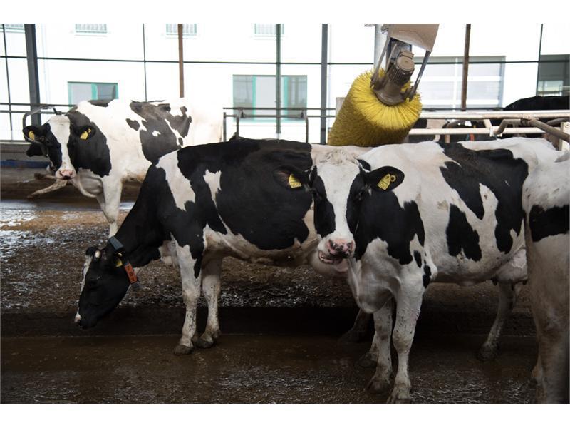 Abschaffung der Milchquote zum 1. April 2015 - Einblicke in einen der modernsten Milchhöfe