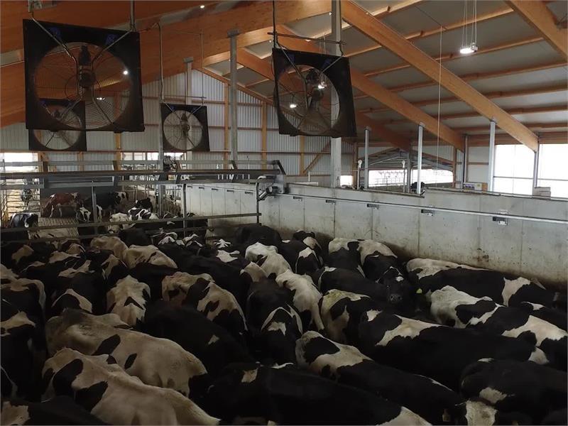 Mehr Milchertrag durch gute Stallbelüftung - Die neueste Technik auf der EuroTier 2016
