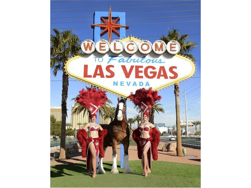 Las Vegas Kicks-Off Big Game Weekend with Famous Budweiser Clydesdales