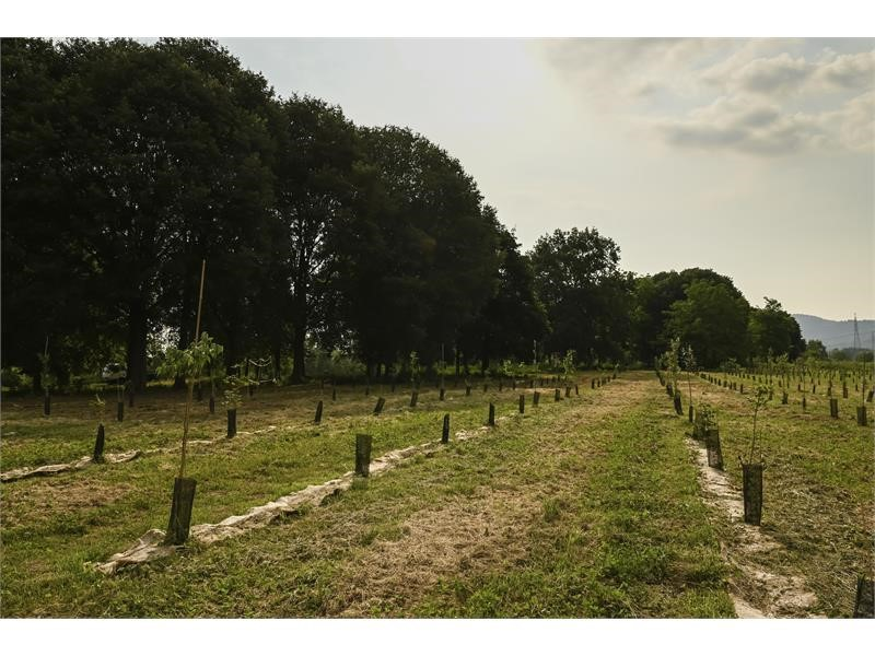"""FPT INDUSTRIAL PROMOTES """"URBAN FORESTRY"""", TURIN'S NEW GREEN LUNG"""