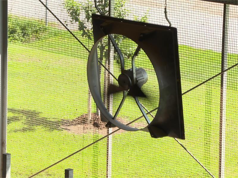 Querlüftung im Milchviehstall - Kein Hitzestress mehr für Kühe im Sommer